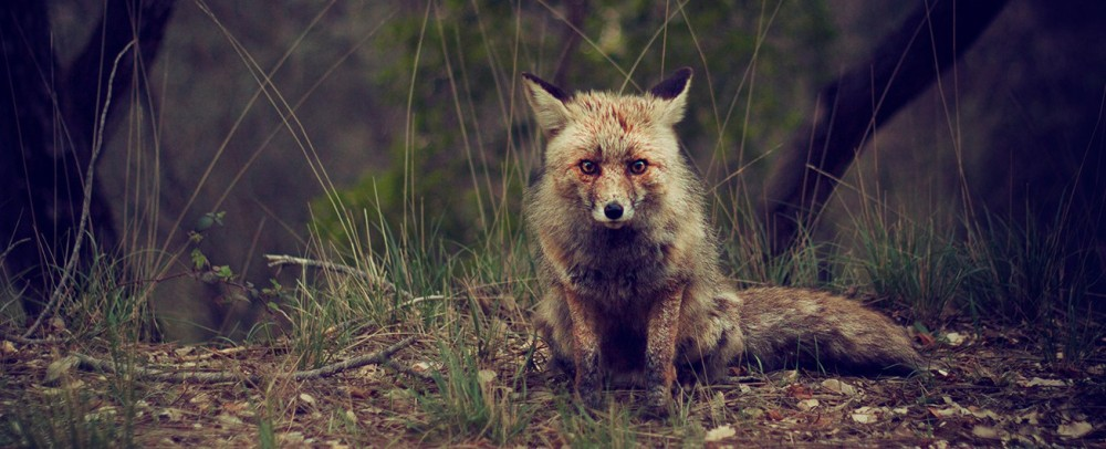 Fox_cropped_header